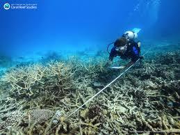 Снимка: Би Би СиИзбеляването на кораловите рифове по света изглежда,