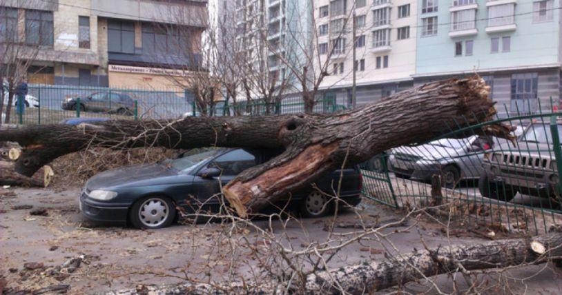 Снимка: ТуитърУраганни ветрове в Москва убиха двама и раниха десетки