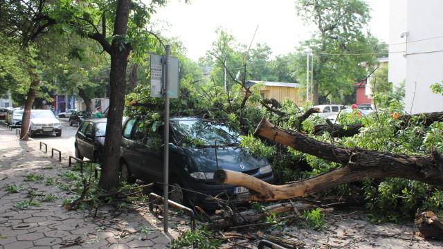 Снимка Би Ти ВиДърво се стовари върху автомобил в центъра